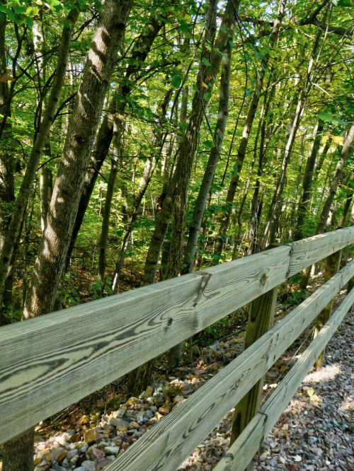 Wood Rail Fence Bordering A Forest