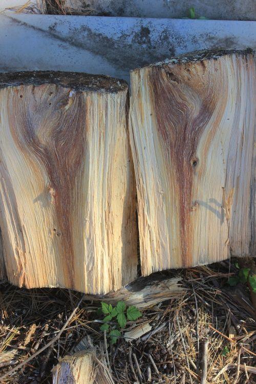 wood spirits pine firewood