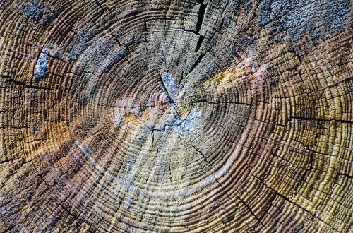 wood texture wooden plank cracks