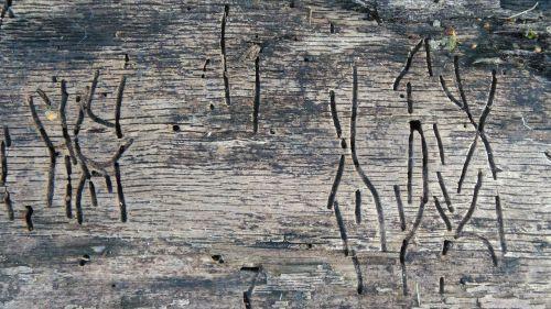 wood worm secret writing wood