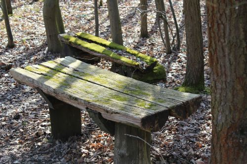 wooden bench forest bench