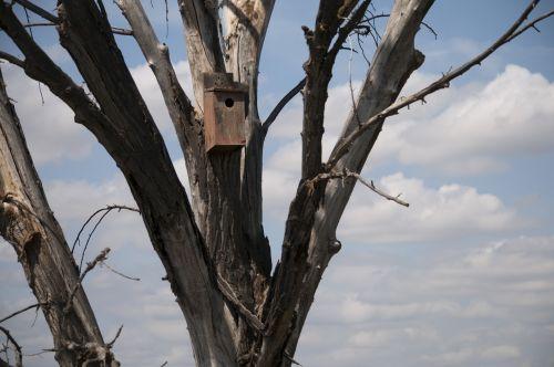 Wooden Bird House In Tree