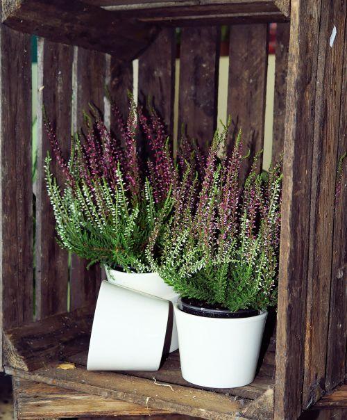 wooden box heather flower pots