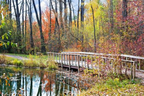 wooden bridge autumn fall