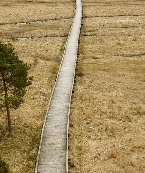 wooden footbridge bog meadow
