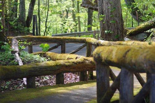wooden path  mossy  handrail