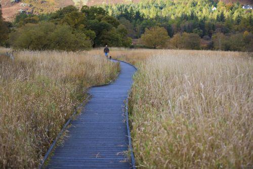 Wooden Pavement And Autumn Grass