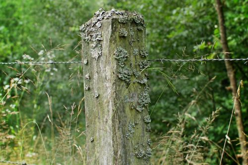 wooden posts post barbed wire