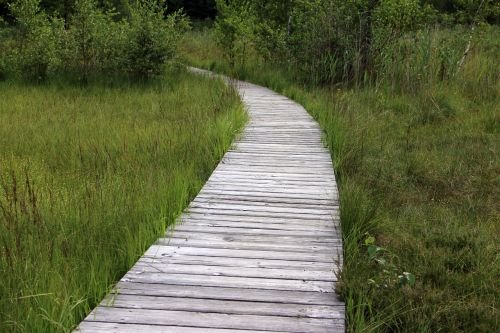 wooden track away path