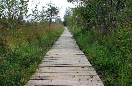 wooden track nature away