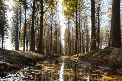 woodland korea national travel