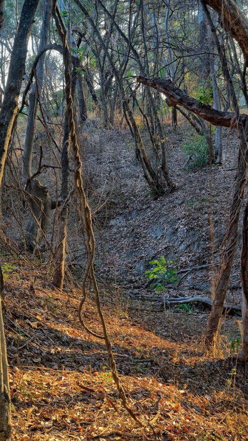 woodland bushland forest australian woodland