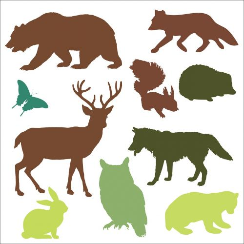 woodland animals animals bear