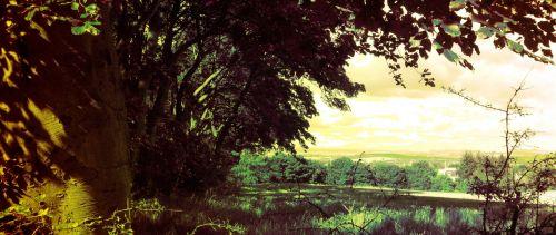 Woodland Country Scene