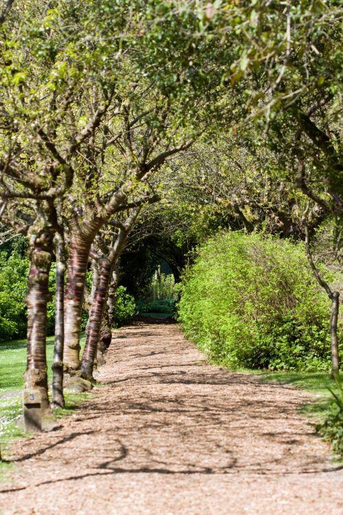 Woodland Tree Walk