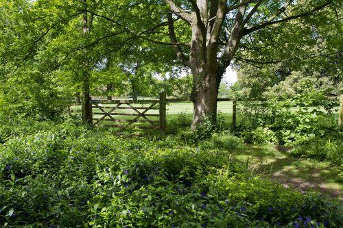 woodland walk old oak tree field gate