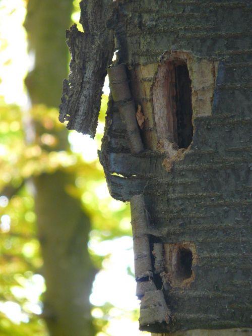 woodpecker cave nest cavity nest
