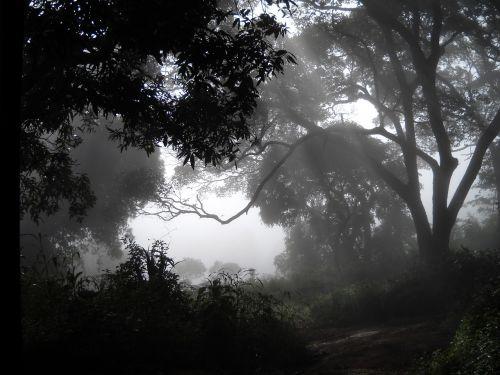 woods fog guinea