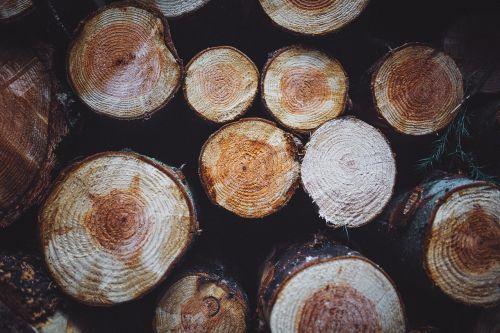 woods logs lumber