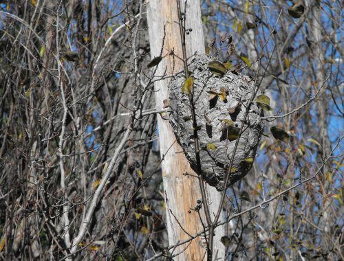 woods tree wasp