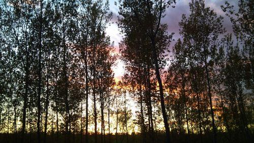 woods forest sunlight