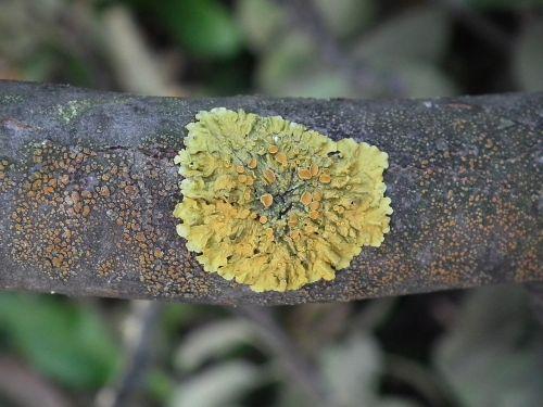 woody mushroom tree