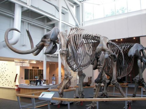 woolly mammoth prehistoric