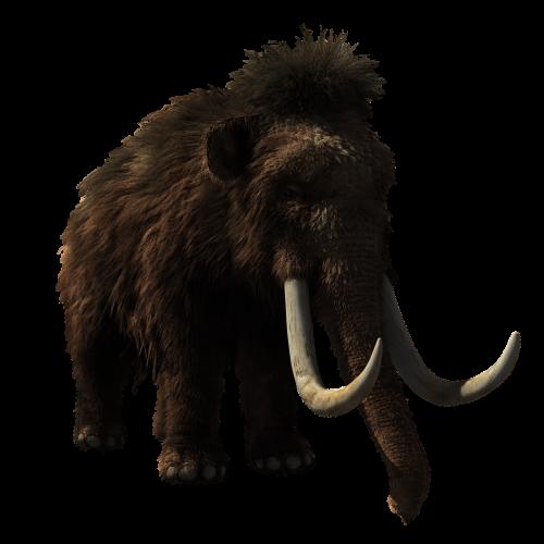 woolly mammoth animal prehistoric