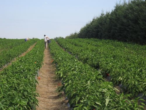 work field agriculture