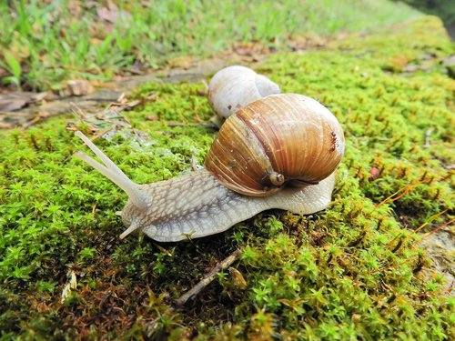 worm  little snail  the multiplication of