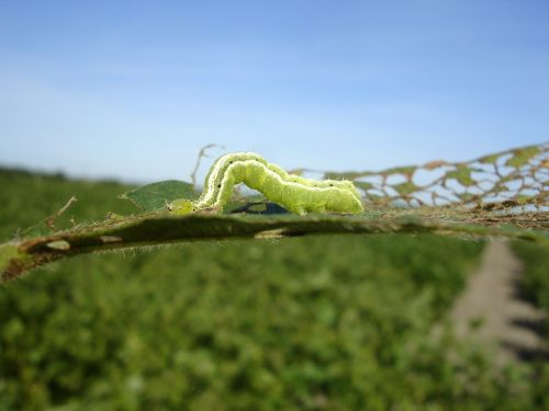worm larva green