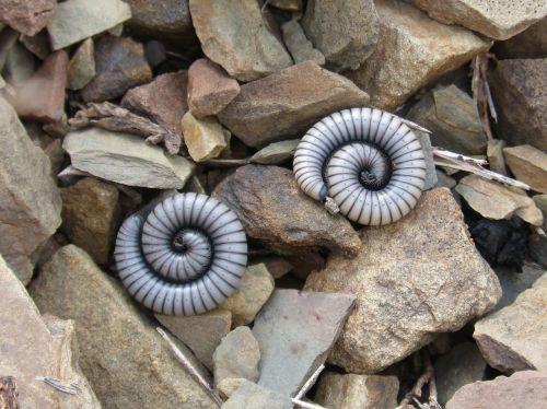 worms millipede centipede