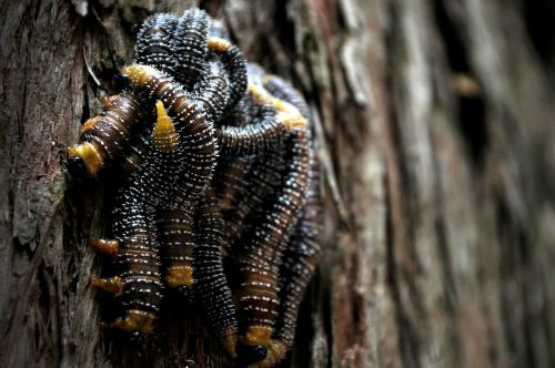 worms pest insects