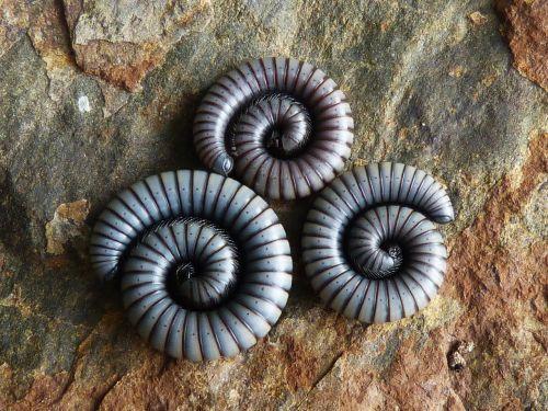 worms spiral rock