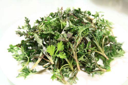 wormwood spring medicinal herbs
