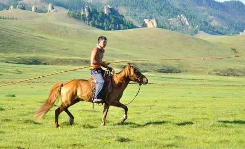 wrangler horse herder cowboy