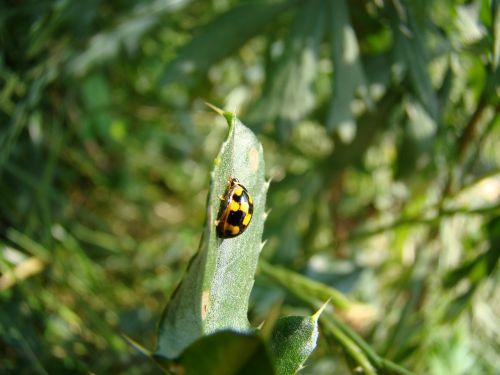 wrzeciążka yellow ladybug ladybug wrzeciążka