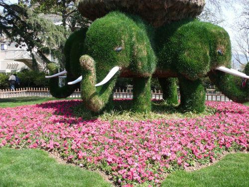 xuanwu lake elephants trees
