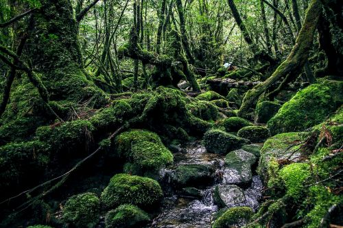 yakushima island green natural