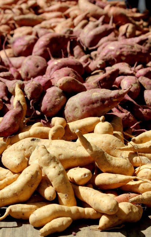 yam potato white