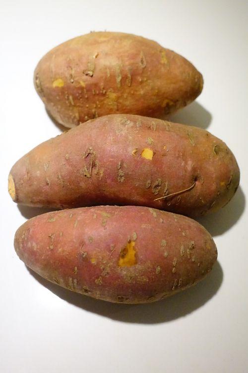 yam ipomoea batatas sweet-potato
