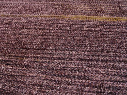 yamada's rice fields winter cutting marks