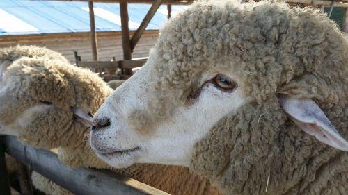 yang yangttae fleece