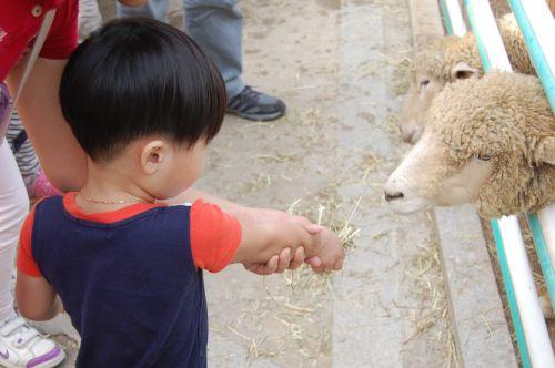 yang zoo children