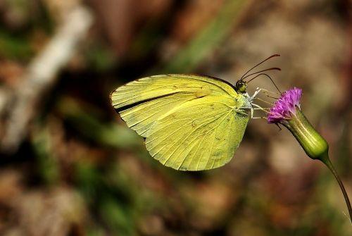 yellow closeup photo