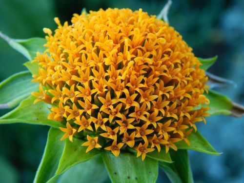 yellow flowercenter pompom