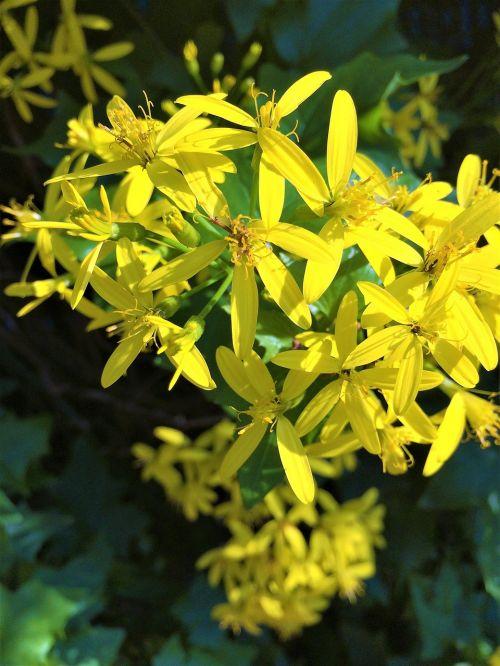 yellow flowers floret