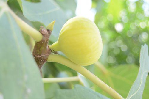 yellow fruit good taste