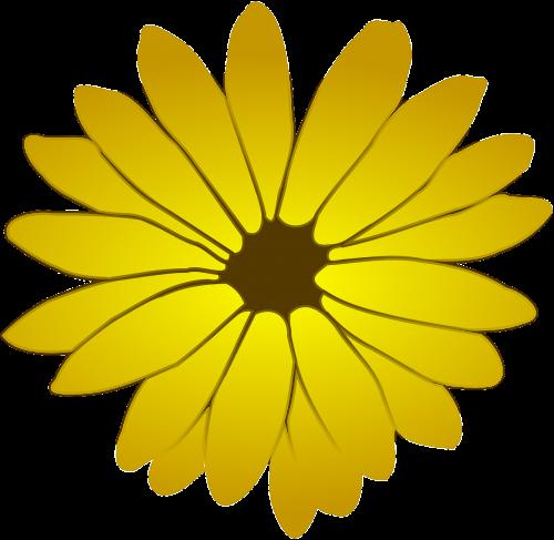 yellow flowers dandelion