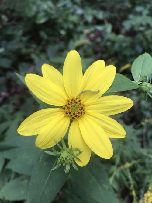 yellow flower floral